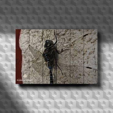 Картина на доске Стрекоза №2