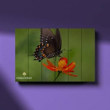 Картина на доске Бабочка №2